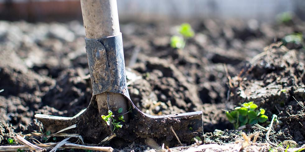Yardwork Service for Neighbors