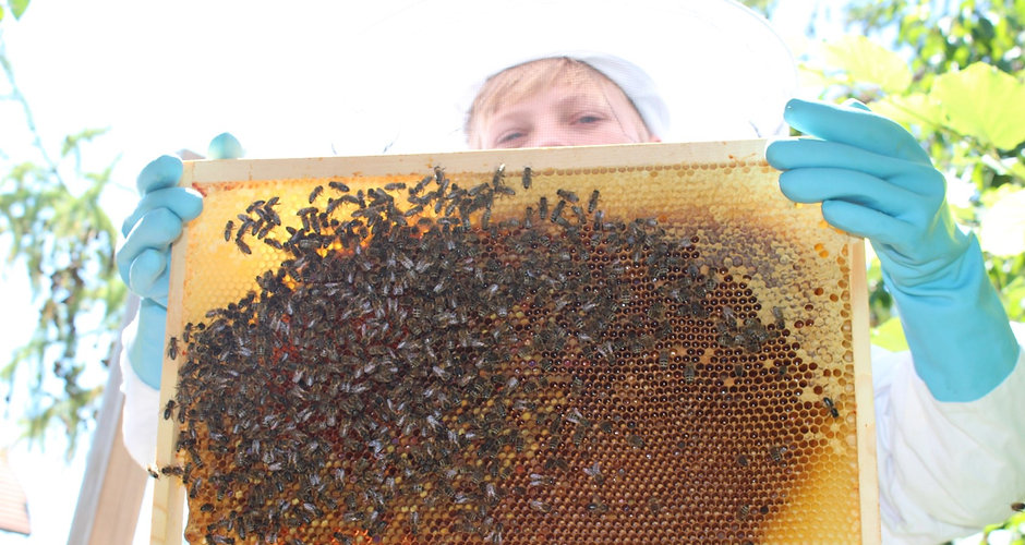 nils mit Bienenwabe