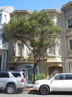 7 Units   Lower Pacific Heights