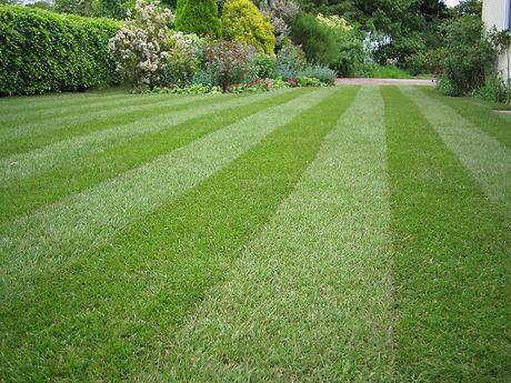 Lawn-stripey-1mg1.jpg