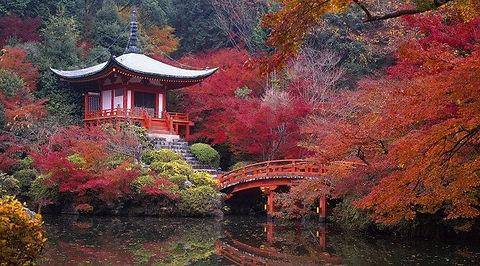 plants-for-japanese-garden-japanese-garden-autumn-leaf-beautiful-bridge-japanese-garden-bridge.jpg