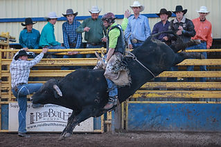 Bull riding 6.jpg