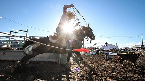 Tie down roping glare.jpg