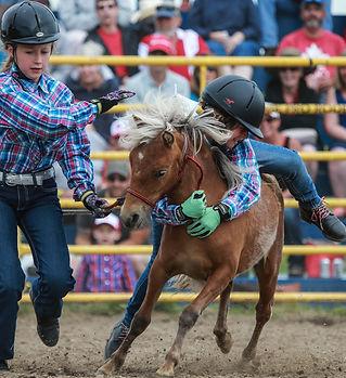 Wild pony race 3.jpg