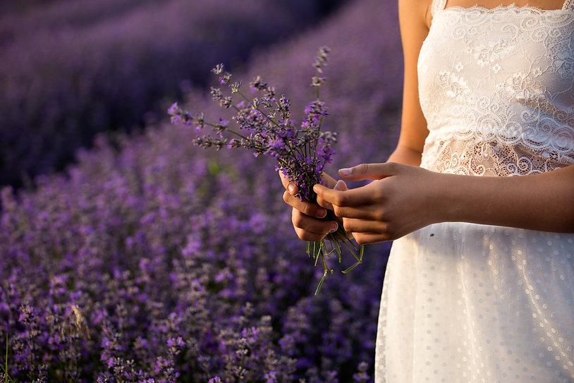 lavender-3576132.jpg