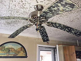 mold and mildew on a ceiling fan