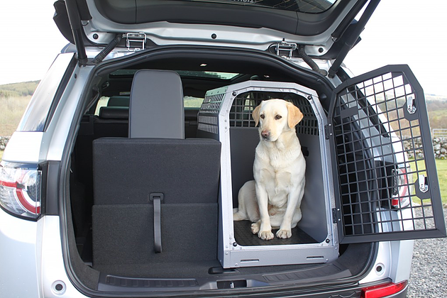 Crate training. Dog in crate in back of car.