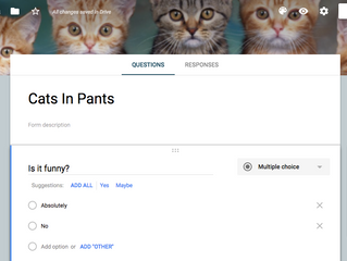Take The Poll: Cat Pants - Funny or not?