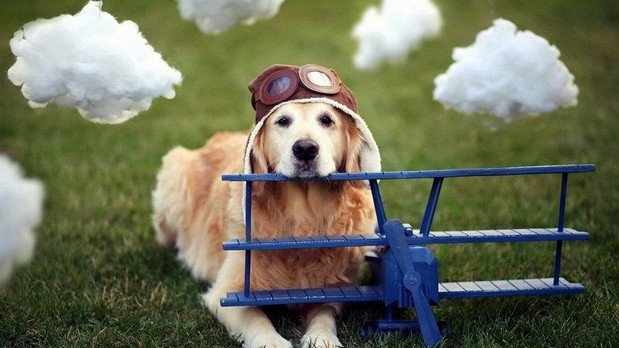 Flying High? Drugs for Pets on Planes