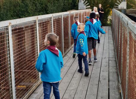 Beavers explore.