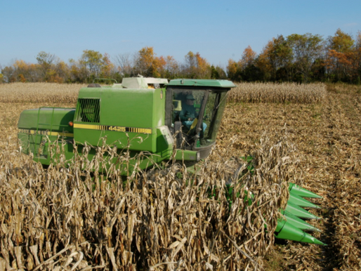 Can You Take the Corn Stalks With You?