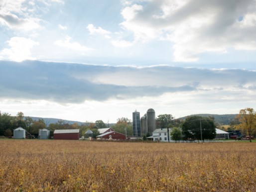 City Ordinances, Scare Guns, and Right-to-Farm Laws