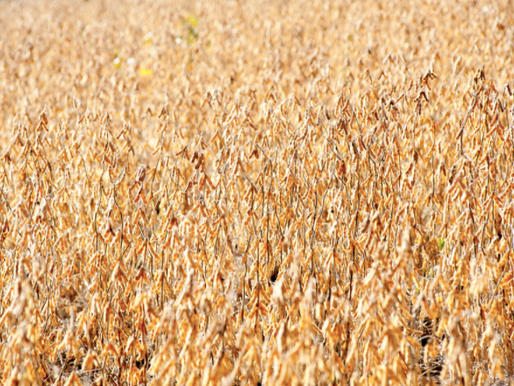 New Actively Engaged Rule Proposed by USDA: What Does It Mean For You?