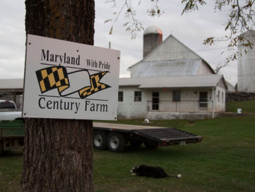 Recent Maryland Decision Highlights Need to Have a Plan to Wind Down Partnerships