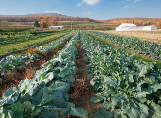 Gleaning, Food Banks, and a Farmer's Liability