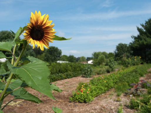 What is a Managed Pollinator Protection Plan (MP3)?