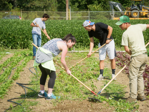 Do You Have Employees, Volunteers Or Interns Working On Your Farm?
