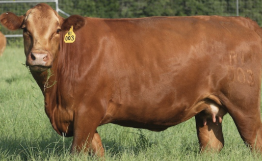 Understanding Contract Remedies: Bear Ranch LLC v. HeartBrand Beef