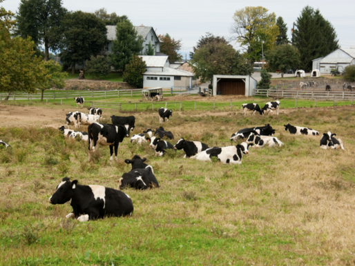 Do Non-Farmers Pay Self-Employment Taxes on CRP Rental Payments?