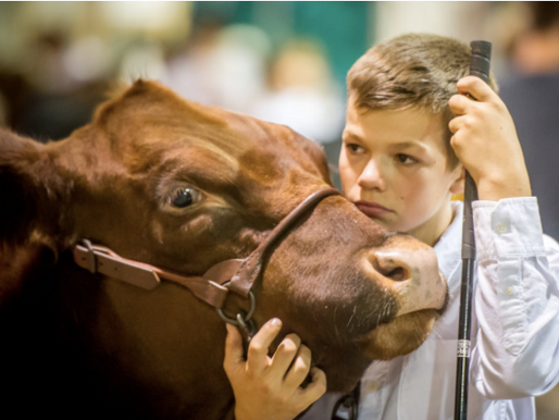 Maryland's New Antibiotics in Livestock Law: What Does it Mean for Your Farm?