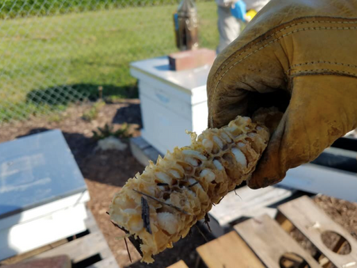Beekeeping Qualifies As Agricultural Use For Maryland Property Tax Assessment