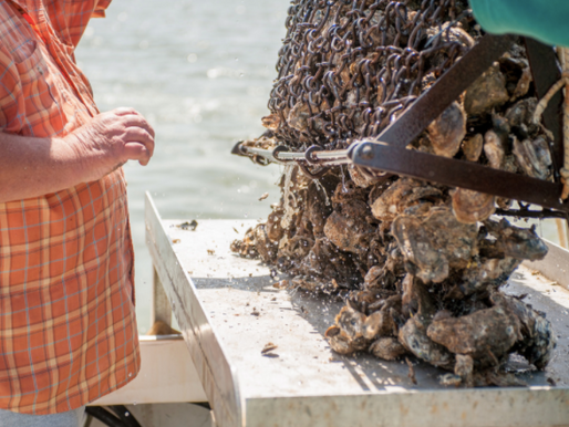 Challenging An Aquaculture Lease Requires More Than Alleged Violations of the Open Meetings Act