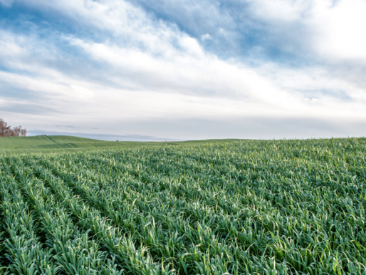 Is Maintaining Soil Fertility in Your Farmland Lease?