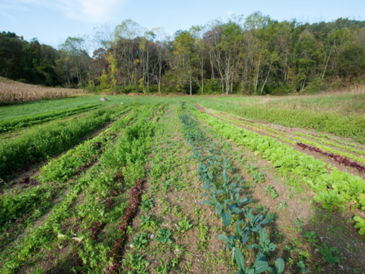 Applying Manure and the Food Safety Modernization Act