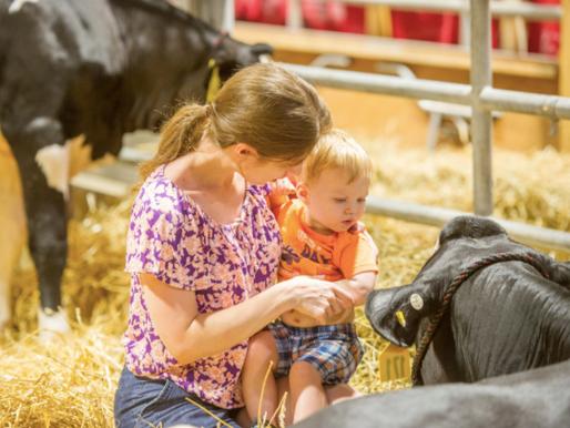 Farm Animals and E.coli- Understanding and Prevention