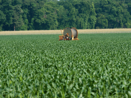 2014 Farm Bill Makes Changes to the Noninsured Crop Disaster Assistance Program