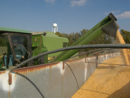 Update on Syngenta Class Action Lawsuit: Where Are We Now?