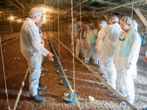 Proposed Poultry Litter Management Act Means a Change in How Growers and Integrators Manage Litter
