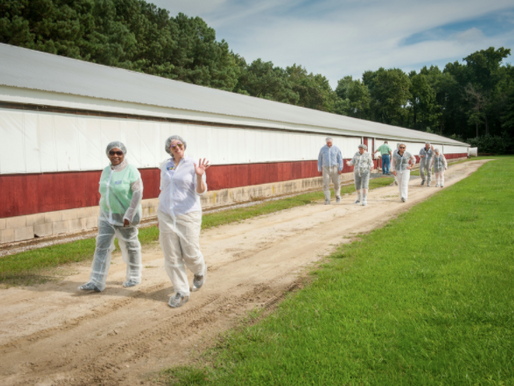 Taking Biosecurity Measures to Limit Your Legal Liability for the Spread of Avian Influenza