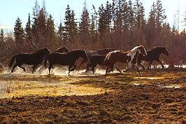 horsin around.JPG