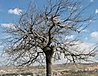 עץ בשלכת.png