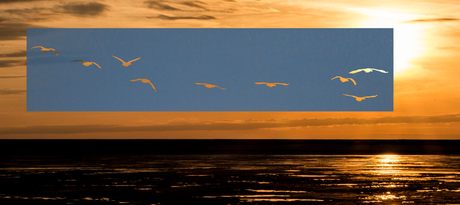 preferred sunset.jpg