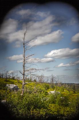 Tree Through a Holga