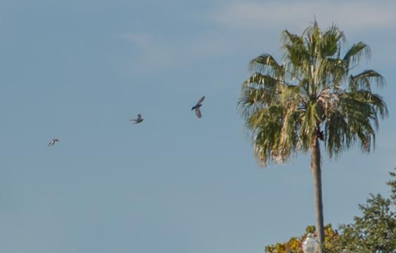 Birds and Tree