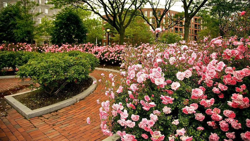 Roses-Long.jpg