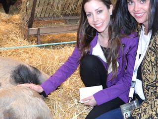 Saturday: Shetlands, Piggies, and a Goat Attack!