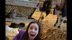 Taylor being eaten alive by a goat!