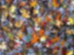 hans-peter-gauster-252751.jpg
