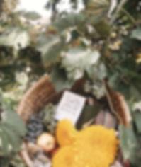 brigitte-tohm-386272_edited.jpg