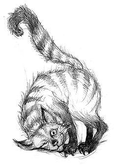 cat web.jpg