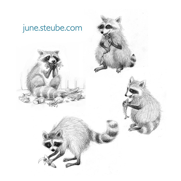 """Racoon study for poem """"Racoon Rascals'"""