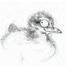 Grebe chick sketch