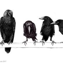 A palaver of crows