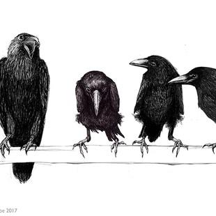 Crows in a palaver