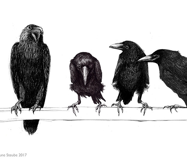A palaver of crows