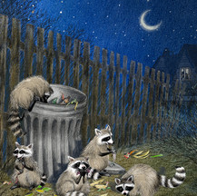 """Illustration to accompany poem, """"Racoon Rascals"""" by June Steube"""